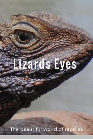 Lizards Eyes The beautiful world of reptiles