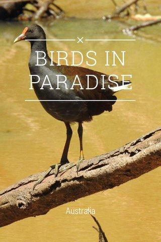 BIRDS IN PARADISE Australia