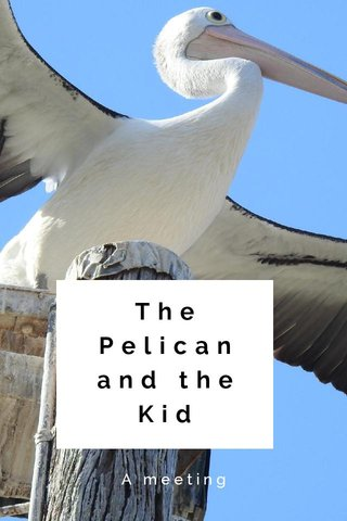 The Pelican and the Kid A meeting