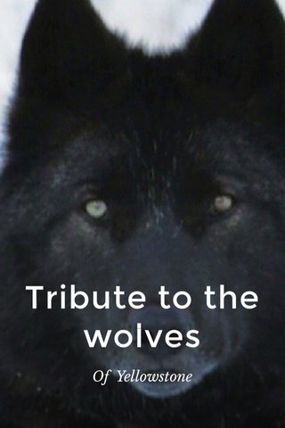 Tribute to the wolves Of Yellowstone