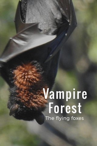Vampire Forest The flying foxes