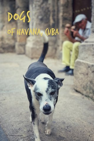 Dogs of Havana, Cuba