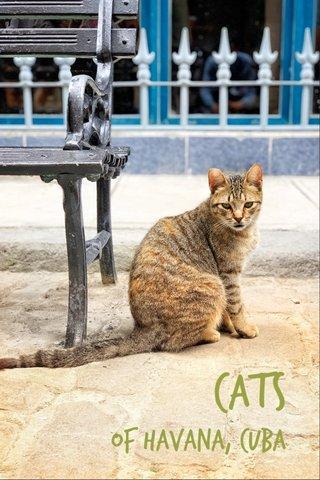 Cats of Havana, Cuba