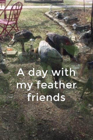 A day with my feather friends