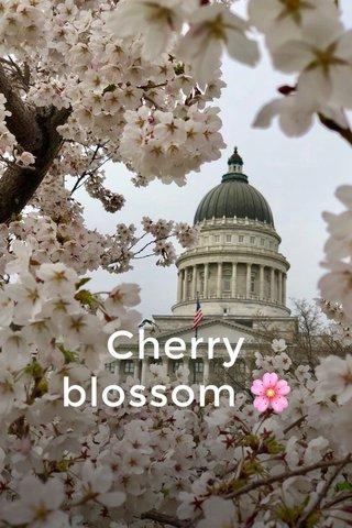 Cherry blossom 🌸