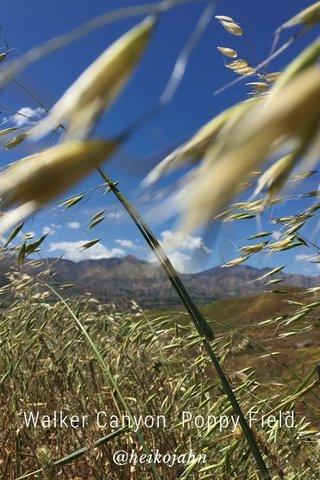 Walker Canyon Poppy Field @heikojahn