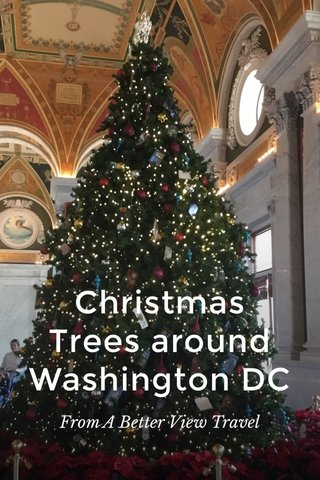 Christmas Trees around Washington DC From A Better View Travel
