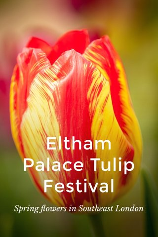 Eltham Palace Tulip Festival Spring flowers in Southeast London