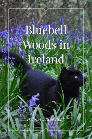 Bluebell Woods in Ireland Ireland's Blue Book