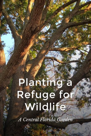 Planting a Refuge for Wildlife A Central Florida Garden