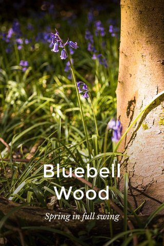 Bluebell Wood Spring in full swing