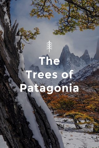 The Trees of Patagonia