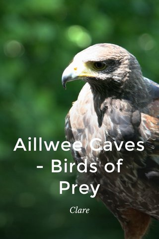 Aillwee Caves - Birds of Prey Clare
