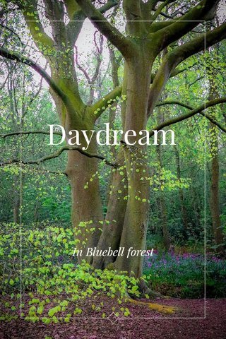 Daydream In Bluebell forest