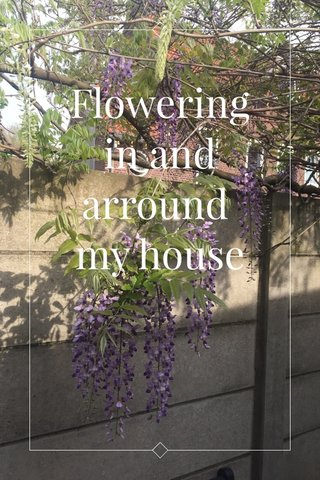 Flowering in and arround my house