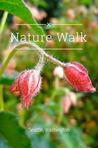 Nature Walk Seattle, Washington