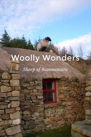 Woolly Wonders Sheep of #connemara