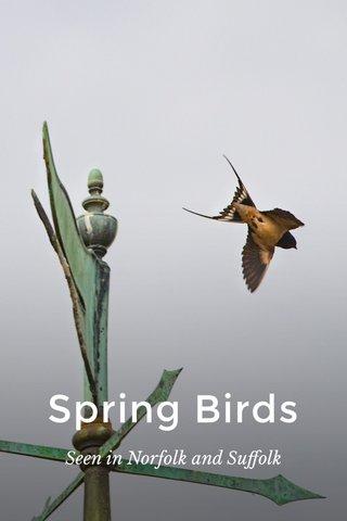 Spring Birds Seen in Norfolk and Suffolk