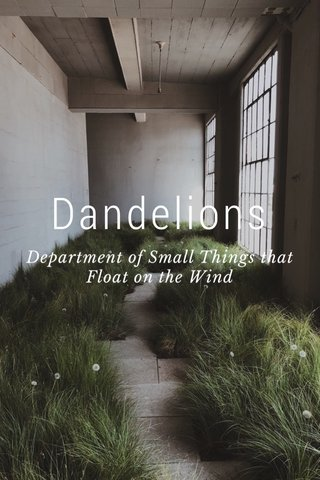 Dandelions Department of Small Things that Float on the Wind