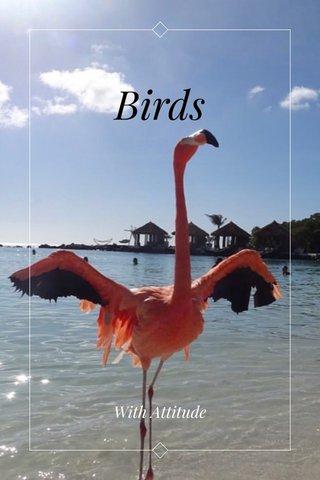 Birds With Attitude