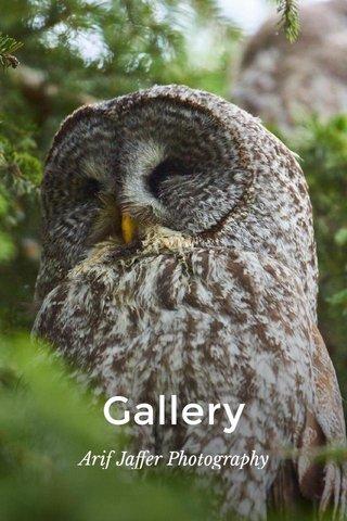 Gallery Arif Jaffer Photography