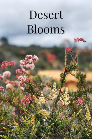 Desert Blooms 2019