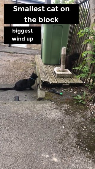 Smallest cat on the block biggest wind up