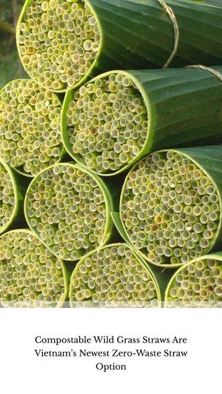 Compostable Wild Grass Straws Are Vietnam's Newest Zero-Waste Straw Option