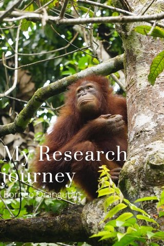 My Research journey Borneo Orangutan