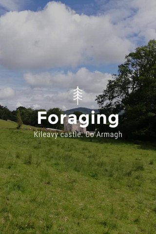 Foraging Kileavy castle. Co Armagh