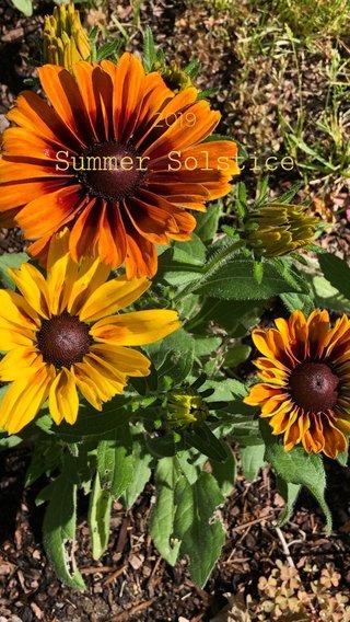 Summer Solstice 2019