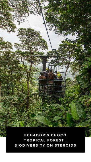 ECUADOR'S CHOCÓ TROPICAL FOREST | BIODIVERSITY ON STEROIDS