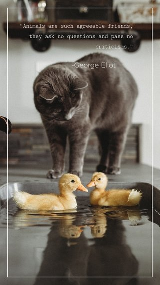 """-George Eliot """"Animals are such agreeable friends, they ask no questions and pass no criticisms."""""""