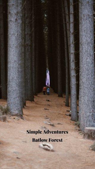 Simple Adventures Batlow Forest