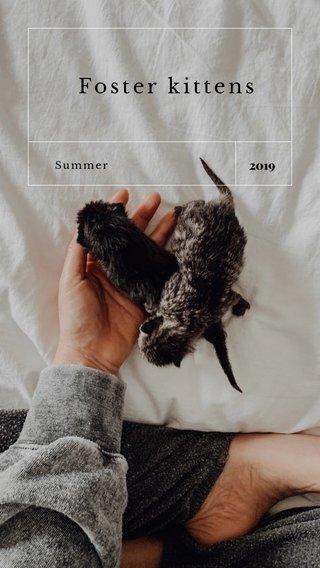 Foster kittens 2019 Summer