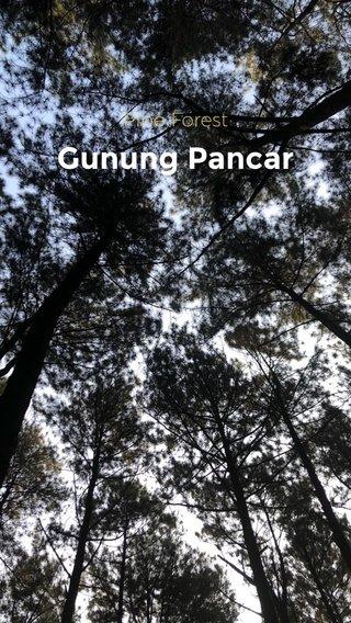 Gunung Pancar Pine Forest
