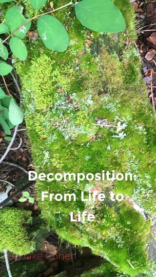 Decomposition: From Life to Life By Jake Cohen