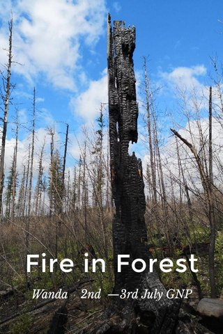 Fire in Forest Wanda 2nd —3rd July GNP