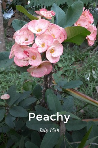 Peachy July 15th