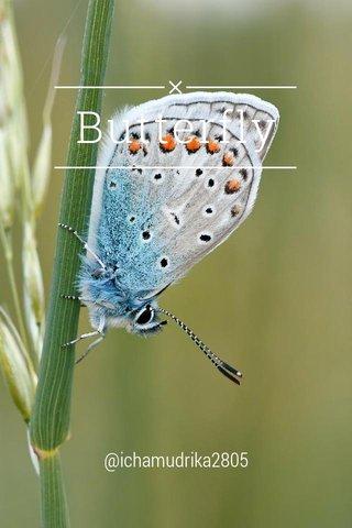 Butterfly @ichamudrika2805
