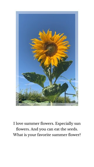 I love summer flowers. Especially sun flowers. And you can eat the seeds. What is your favorite summer flower?