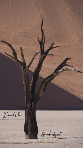 Namib desert Dead Vlei