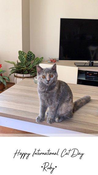 Happy International Cat Day •Ruby•