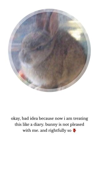 okay, bad idea because now i am treating this like a diary. bunny is not pleased with me. and rightfully so 👺