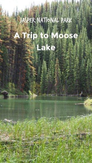A Trip to Moose Lake Jasper National Park