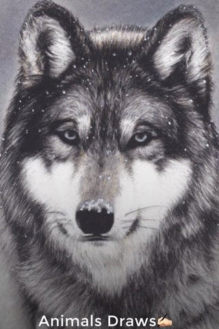 Animals Draws✍🏻