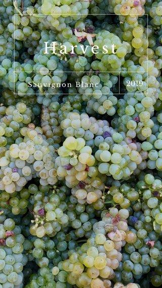 Harvest 2019 Sauvignon Blanc