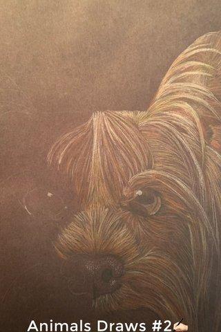 Animals Draws #2✍🏻