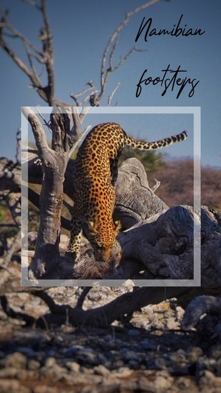 Namibian footsteps