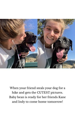 When your friend steals your dog for a hike and gets the CUTEST pictures. Baby bean is ready for her friends Kane and Indy to come home tomorrow!